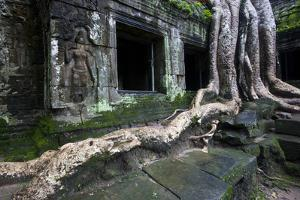 Giant Tree Roots at Ta Prohm Temple by Michael Melford