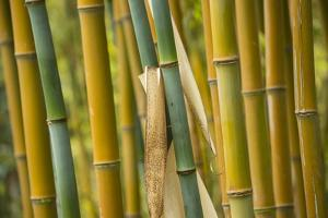 Stalks of Bamboo by Michael Melford