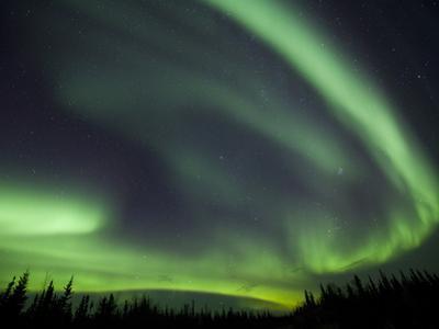 The Aurora Borealis Streaks the Sky Above Birch Creek by Michael Melford