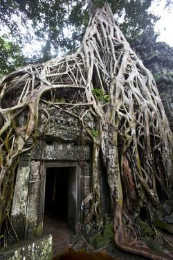 Tree Roots Encase a Wall at the Ancient Temple of Ta Prohm by Michael Melford