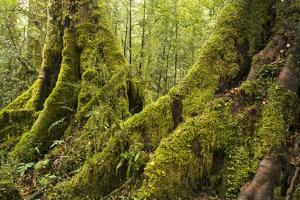 Vegetation on Milford Track in Fiordland National Park by Michael Melford