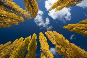 Willow Trees Seem to Touch the Sky Near Lake Wanaka by Michael Melford