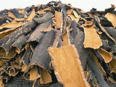 Cork Bark for Bottle Corks Stacked to Dry Near Tempio Pausania, Island of Sardinia, Italy