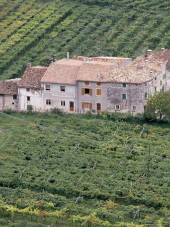 Vineyards Near Fumane in the Centre of the Valpolicella Classico Zone, Fumane, Veneto, Italy