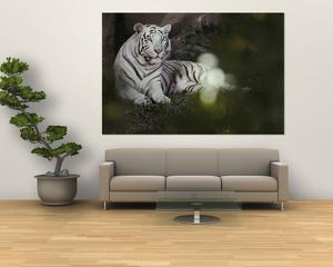 A Rare White Tiger at the Cincinnati Zoo by Michael Nichols