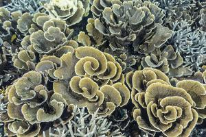 A Profusion of Hard and Soft Coral Underwater on Siaba Kecil by Michael Nolan