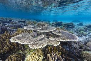A profusion of hard and soft corals on Sebayur Island, Komodo Nat'l Park, Flores Sea, Indonesia by Michael Nolan