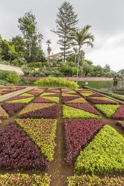 A View of the Botanical Gardens by Michael Nolan