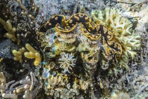 Hard and Soft Corals and Giant Clam Underwater on Sebayur Island by Michael Nolan