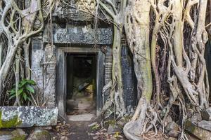 Jungle Overgrowth at Ta Prohm Temple (Rajavihara) by Michael Nolan