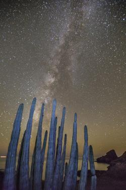 Night View of the Milky Way with Organ Pipe Cactus (Stenocereus Thurberi) in Foreground by Michael Nolan