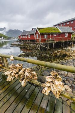 Norwegian Cod Fishing Town of Reine, Lofoton Islands, Norway, Scandinavia, Europe by Michael Nolan