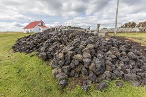 Peat Drying in the Wind for Fuel at Long Island Sheep Farms, Outside Stanley, Falkland Islands by Michael Nolan