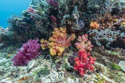 Profusion of hard and soft corals on Tengah Kecil Island, Komodo Nat'l Park, Flores Sea, Indonesia by Michael Nolan