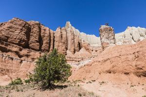 Red rock sandstone formations on the Grand Parade Trail, Kodachrome Basin State Park, Utah, United  by Michael Nolan