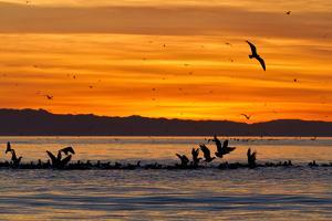 Sunrise, Isla Rasa, Gulf of California (Sea of Cortez), Baja California, Mexico, North America by Michael Nolan