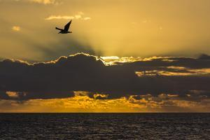 Sunrise Near Punta Colorado, San Jose Island, Baja California Sur, Mexico, North America by Michael Nolan