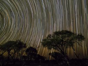 The milky way over acacia trees at night in the Okavango Delta, Botswana by Michael Nolan