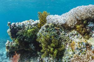 Underwater Reef System on Pink Sand Beach, Komodo National Park, Komodo Island, Indonesia by Michael Nolan