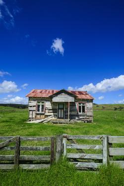 Old Farming Cottage, West Coast, Northland, North Island, New Zealand, Pacific by Michael