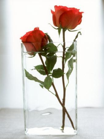 Two Red Roses in a Glass Vase by Michael Paul