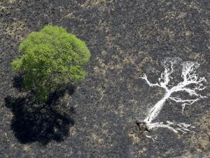 Ashes of a Burned Tree and a Live Standing One: Life and Death by Michael Polzia