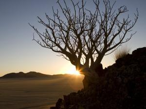 Backlit Tree on a Hill Above the Desert at Sunset by Michael Polzia