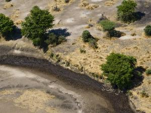Crocodiles in the Semi Dry Katuma River Awaiting Prey by Michael Polzia