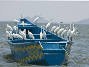 Egrets on a Blue Boat with a Yellow Pattern by Michael Polzia