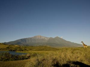 Giraffe Stands in a Landscape with Mt. Meru in the Background by Michael Polzia