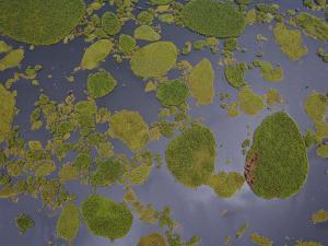 Vegetation Floating on Lake Wamala and Reflections of a Cloudy Sky by Michael Polzia