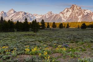 Morning in Pilgrim Creek Meadows, Grand Teton NP, Wyoming by Michael Qualls