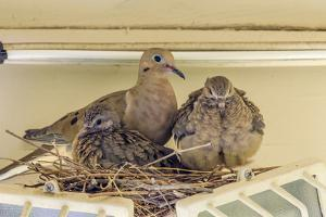 Sheltered Nesting Space and Mourning Dove Family Atop a Security Light by Michael Qualls