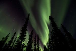 The Aurora Borealis Lights Up the Night Sky by Michael Quinton