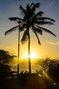 Backlit Palm Tree in the Fortress of Fortaleza San Felipe, Puerto Plata, Dominican Republic by Michael Runkel