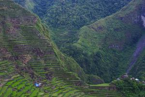 Batad Rice Terraces, Banaue, Luzon, Philippines by Michael Runkel