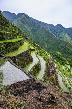 Batad Rice Terraces, Part of the UNESCO World Heritage Site of Banaue, Luzon, Philippines by Michael Runkel