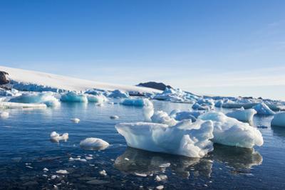 Beautiful little icebergs, Hope Bay, Antarctica, Polar Regions by Michael Runkel