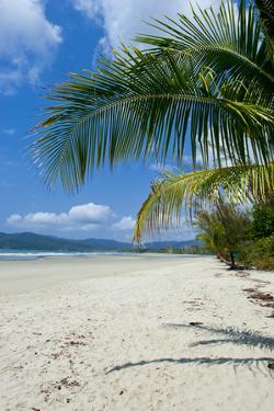 Beautiful Sand Beach, Cape Tribulation, Queensland, Australia, Pacific by Michael Runkel