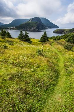 Bottle Cove Near Corner Brook, Newfoundland, Canada, North America by Michael Runkel