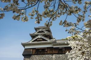 Cherry Blossom and Kumamoto Japanese Castle, Kumamoto, Kyushu, Japan, Asia by Michael Runkel