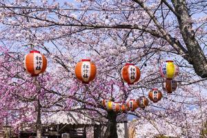 Cherry Blossom in the Maruyama-Koen Park, UNESCO World Heritage Sight Kyoto, Japan by Michael Runkel