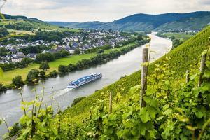 Cruise Ship Passing a Vineyard at Muehlheim, Moselle Valley, Rhineland-Palatinate, Germany, Europe by Michael Runkel
