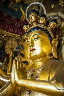 Golden Buddha in the Guandu Temple, Guandu, Taipei, Taiwan, Asia by Michael Runkel