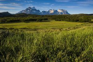 Green Grass, Torres Del Paine National Park, Patagonia, Chile, South America by Michael Runkel