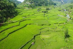 Hapao Rice Terraces, Banaue, UNESCO World Heritage Site, Luzon, Philippines, Southeast Asia, Asia by Michael Runkel