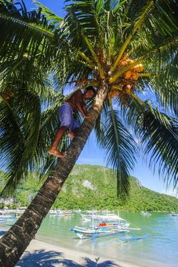 Man Climbing on a Coconut Tree, El Nido, Bacuit Archipelago, Palawan, Philippines by Michael Runkel