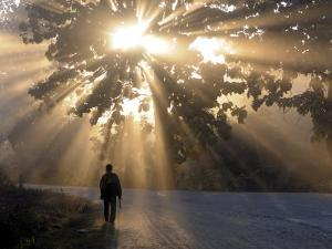 Man Walking Along a Street with Sun Rays Shining Through a Tree, Highlands, Myanmar by Michael Runkel