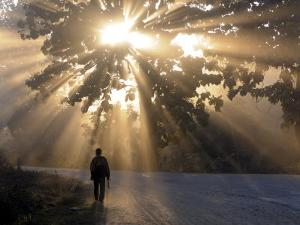 Man Walking Along a Street with Sun Rays Shining Through a Tree, Highlands, Myanmar by Michael Runkel