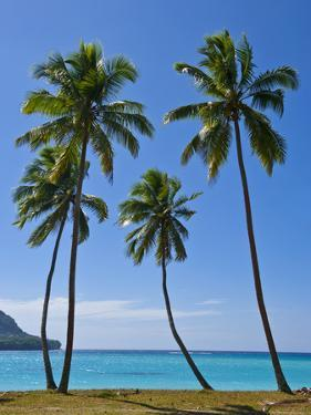 Palm Trees, Port Orly, Island of Espiritu Santo, Vanuatu, South Pacific, Pacific by Michael Runkel